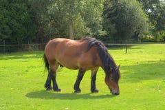 El caballo en el campo Fotos de archivo