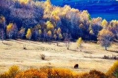 El caballo en los prados del otoño Foto de archivo