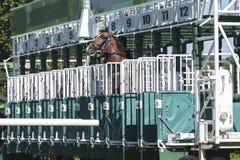 El caballo en pánico intenta escapar desde el principio la puerta antes del ra Imágenes de archivo libres de regalías