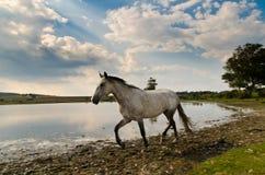 El caballo en whitten la charca Foto de archivo libre de regalías