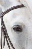 El caballo es frenillo foto de archivo libre de regalías