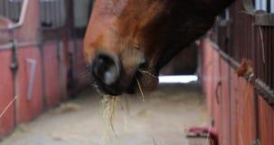 El caballo está comiendo en un establo almacen de video
