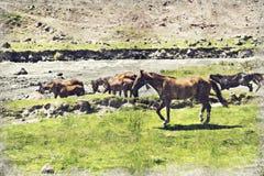 el caballo está pastando en un prado en las montañas de Georgia Digita libre illustration