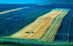 El caballo galopante en el prado Fotos de archivo