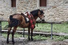 El caballo incansable Imagenes de archivo