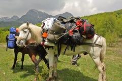 El caballo lleva los morrales Foto de archivo libre de regalías