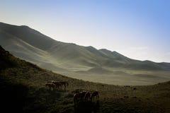 El caballo marrón Foto de archivo