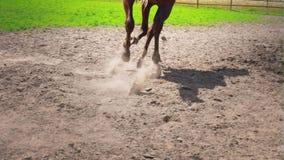 El caballo marrón joven con el carácter obstinado corre en el prado almacen de video