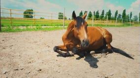El caballo marrón se acuesta en la tierra seca en el prado de la granja metrajes