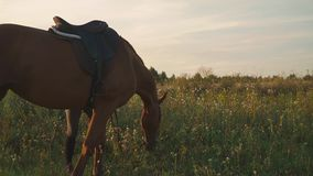 El caballo mastica la hierba en el campo almacen de video