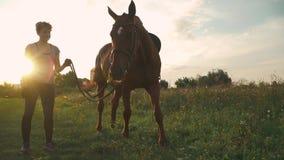 El caballo mastica la hierba en el campo almacen de metraje de vídeo