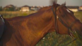 El caballo mastica la hierba en el campo metrajes