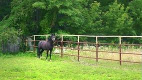 El caballo negro que se coloca en el corral en un fondo de árboles verdes almacen de metraje de vídeo