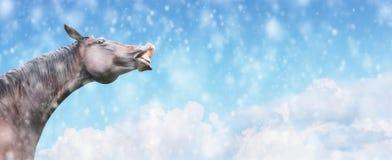 El caballo negro sonríe contra fondo de la nieve y del cielo que caen, bandera del invierno Imágenes de archivo libres de regalías