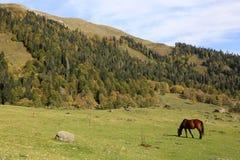 El caballo pasta en las monta?as del C?ucaso fotos de archivo