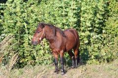 El caballo pasta en un prado verde imágenes de archivo libres de regalías