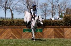 El caballo que salta en una raza del campo a través Imagen de archivo