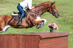 El caballo que salta sobre un obstáculo Fotos de archivo libres de regalías