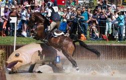 El caballo que salta un pescado en agua durante una raza Fotografía de archivo libre de regalías