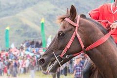 El caballo que sonríe en una carrera de caballos para se convierte en una carrera de caballos del ganador en Takengon Aceh Indone Fotos de archivo