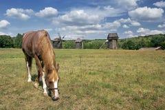 El caballo rojo está pastando en un campo Fotos de archivo