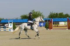 El caballo salta Foto de archivo