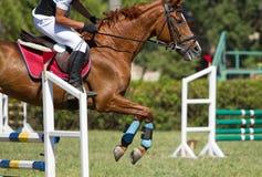 El caballo salta un obstáculo Foto de archivo libre de regalías