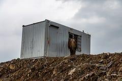 El caballo se coloca cerca del envase del metal en el mismo top de la montaña, región de Krasnodar, Rusia fotos de archivo libres de regalías
