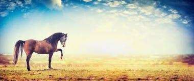 El caballo se coloca con un pie delantero aumentado en fondo del pasto y del cielo Foto de archivo