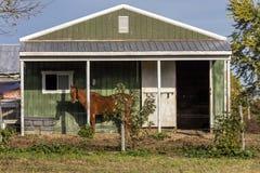 El caballo se coloca delante del granero verde, backroads de Virginia, el 26 de octubre de 2016 imagen de archivo libre de regalías
