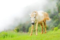 El caballo se relaja Foto de archivo libre de regalías