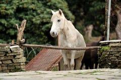 El caballo se relaja Imagen de archivo