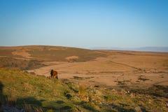 El caballo solitario en amarra Fotografía de archivo