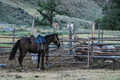 El caballo tradicional del nómada mongol se coloca al lado de una pluma de madera foto de archivo