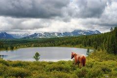 El caballo va al lago imagen de archivo