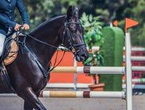 El caballo y el jinete negros de la doma en azul uniforman en la competencia de salto de demostración Imagen de archivo libre de regalías