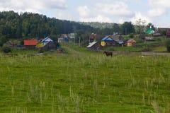 El caballo y la vaca pastan en un prado cerca del pueblo Imagen de archivo libre de regalías