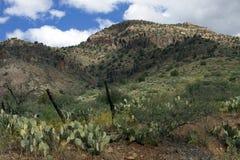 El cacto y los árboles de hoja perenne crecen de la ladera rocosa Imagenes de archivo