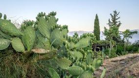 El cactus crece el camino cercano, Turquía imagen de archivo