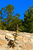 El cactus crece en una pared Imagenes de archivo