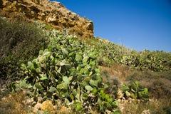El cactus cubrió la ladera, flores amarillas, tierra seca, al aire libre Imágenes de archivo libres de regalías