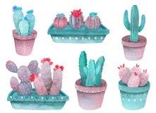 El cactus de la acuarela fijó los colores azulverdes, de los rosas y violetas libre illustration