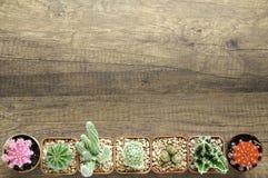 El cactus de la visión superior encendido wodden el fondo Foto de archivo libre de regalías
