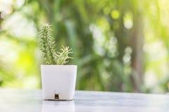 El cactus del primer en el pote plástico blanco en la tabla mable en delante de casa con la opinión borrosa del jardín texturizó  Foto de archivo