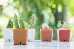 El cactus del primer en pote plástico marrón en la tabla mable en delante de casa con la opinión borrosa del jardín texturizó el  Imágenes de archivo libres de regalías