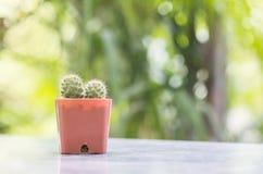 El cactus del primer en pote plástico marrón en la tabla mable en delante de casa con la opinión borrosa del jardín texturizó el  Foto de archivo libre de regalías