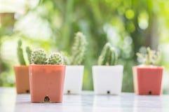 El cactus del primer en pote plástico marrón en la tabla mable en delante de casa con la opinión borrosa del jardín texturizó el  Fotos de archivo libres de regalías