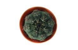 El cactus en el pote Imagenes de archivo