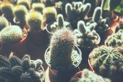 El cactus florece en los potes, potes de flores coloridos, tienda de flores, r Fotografía de archivo