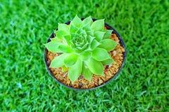 el cactus subió Fotografía de archivo libre de regalías